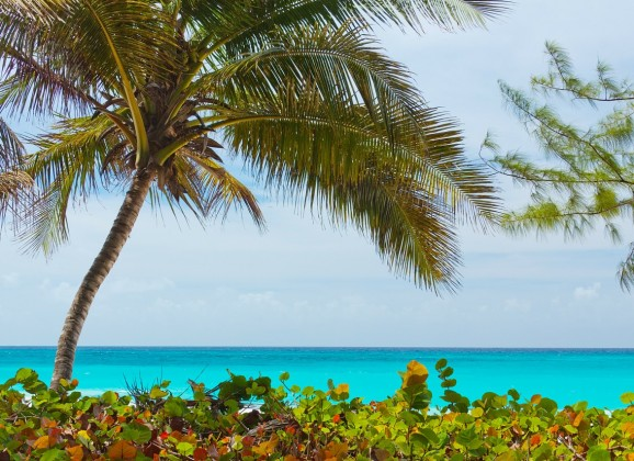 90 Seconds With Lime Beach Bar, Nevis