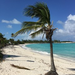 Big D's Conch Spot, Exuma's Beach Bar Treaure in the Bahamas