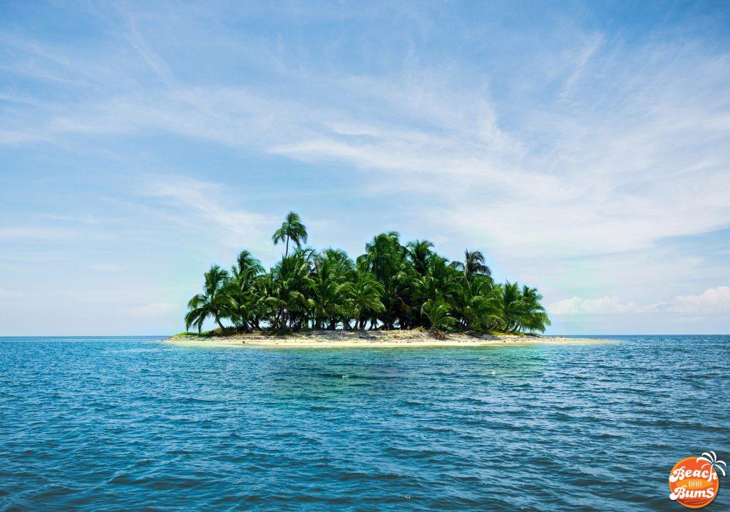 palm trees, beach wallpaper