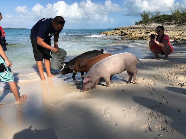 beach bar, rose island, bahamas