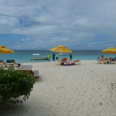 Elodia's Beach Bar – Holding Its Own on Anguilla's Shoal Bay