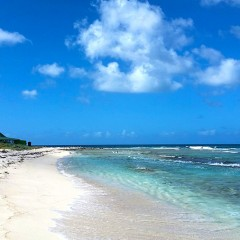 The Untamed Wild Side of Anguilla's Sandy Island