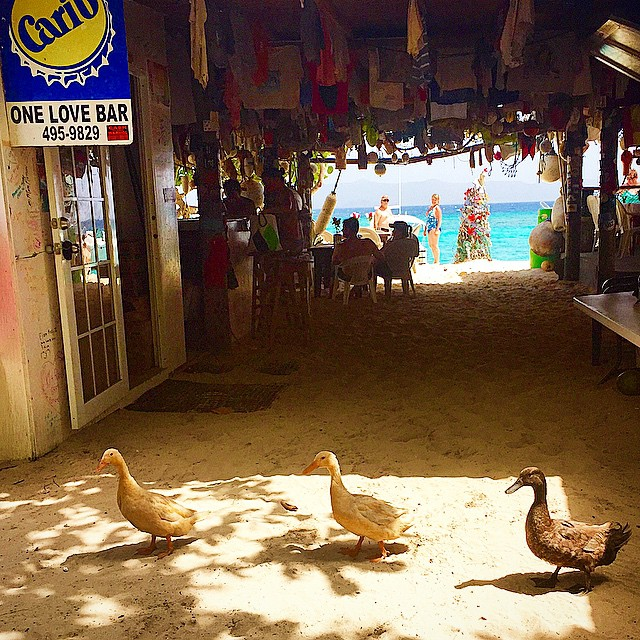Three Ducks hanging out at One Love Bar, Jost Van Dyke, British Virgin Islands. Photo by @helloskipper.