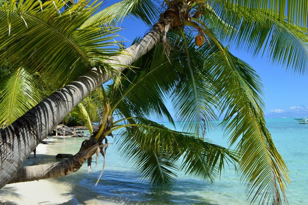 beach, ocean, palm trees