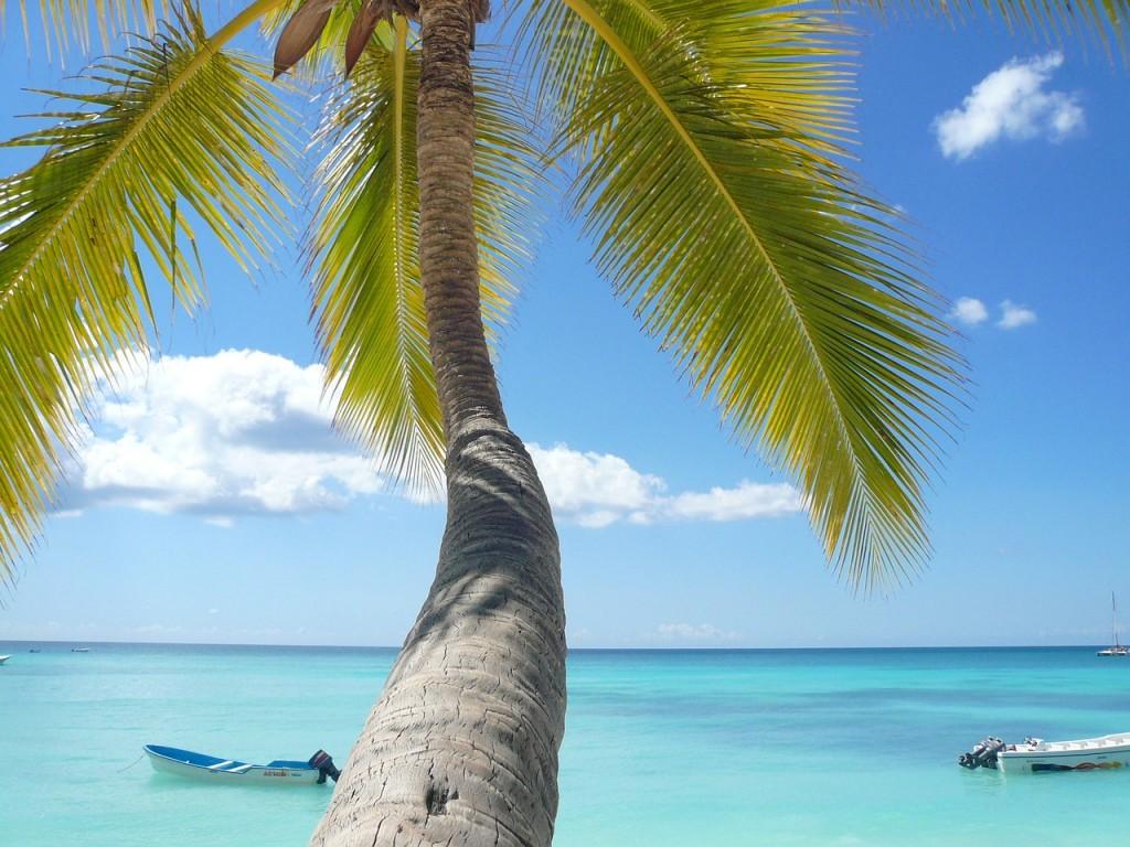 ocean, palm trees