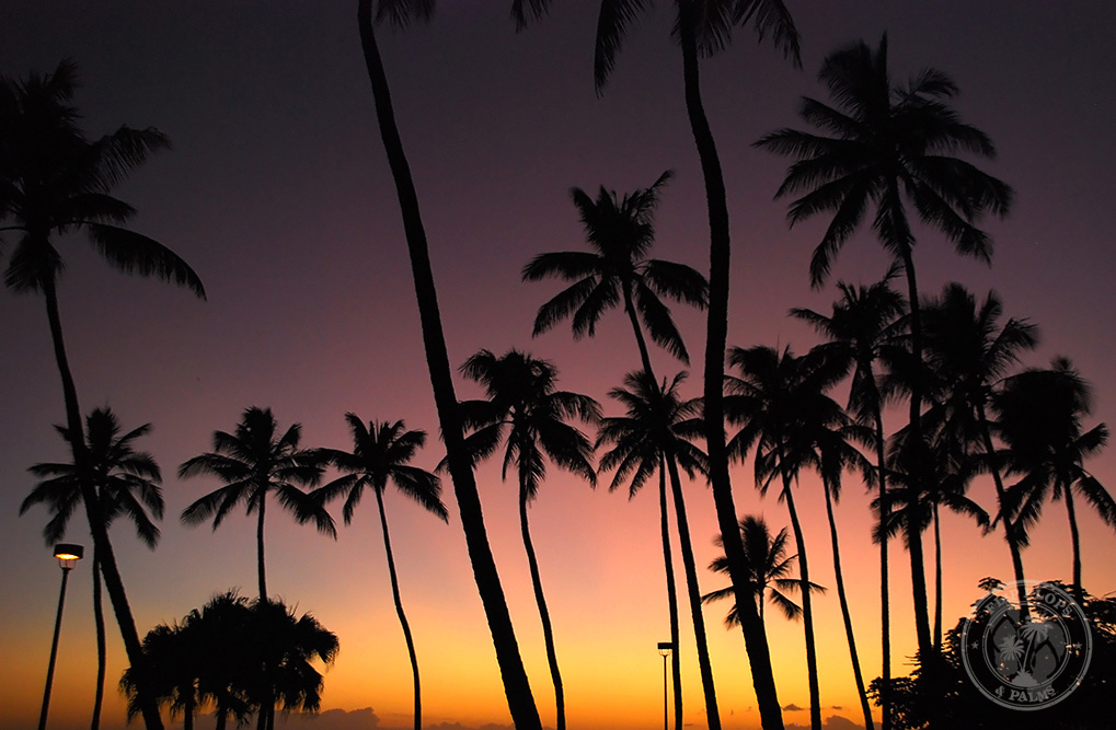 Sunset - Honolulu. Photo by Todd Hayward.