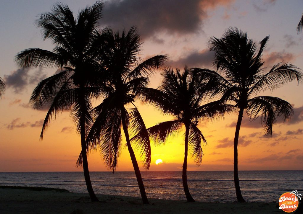 beach, caribbean, palm trees