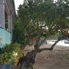 Beach Bar and Businesses for Sale in St. John, US Virgin Islands