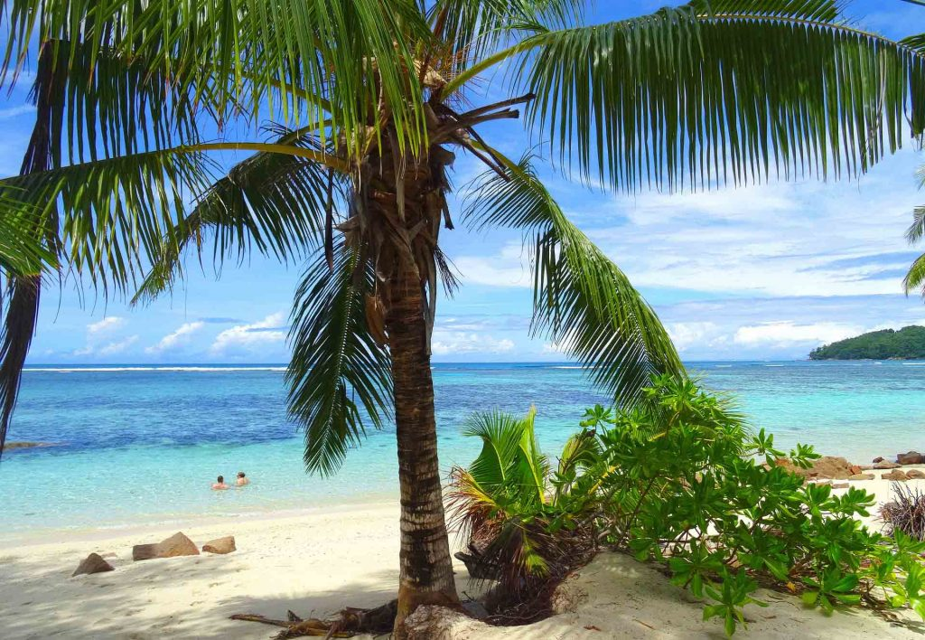 beach wallpaper, palm tree