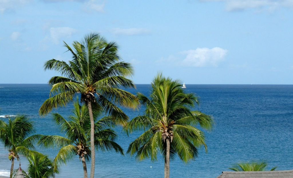 caribbean, palm tree