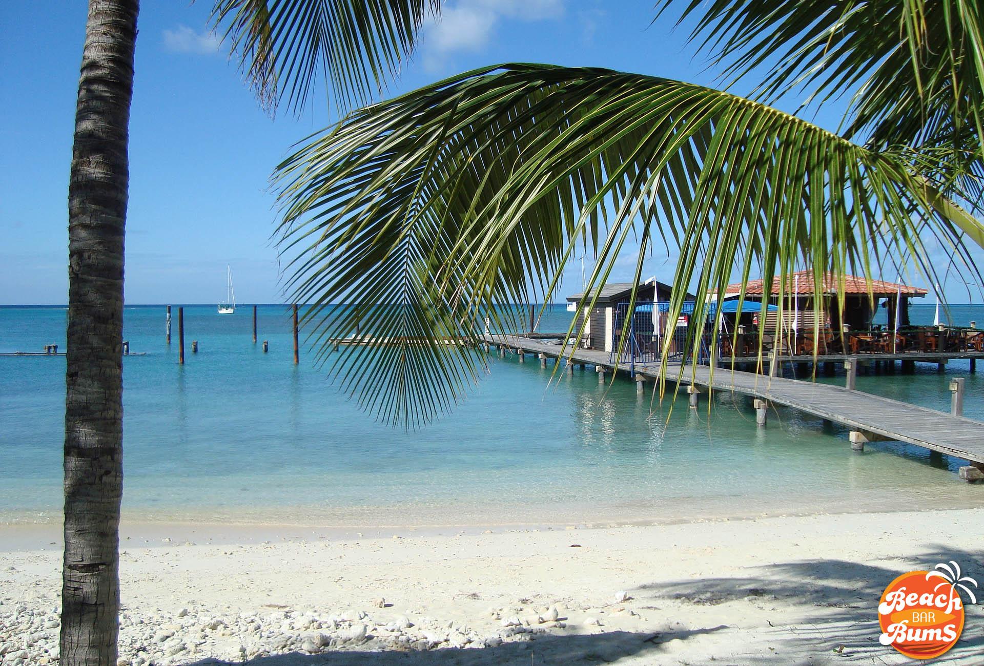 beach wallpaper, caribbean, palm tree