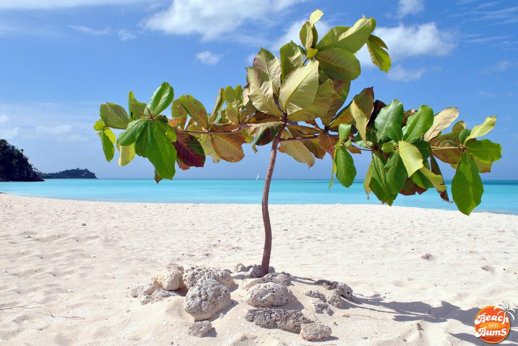caribbean, beach wallpaper