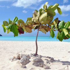 Beach Thursday Pic of the Week – Getting Down and Dirty With the Green in Antigua