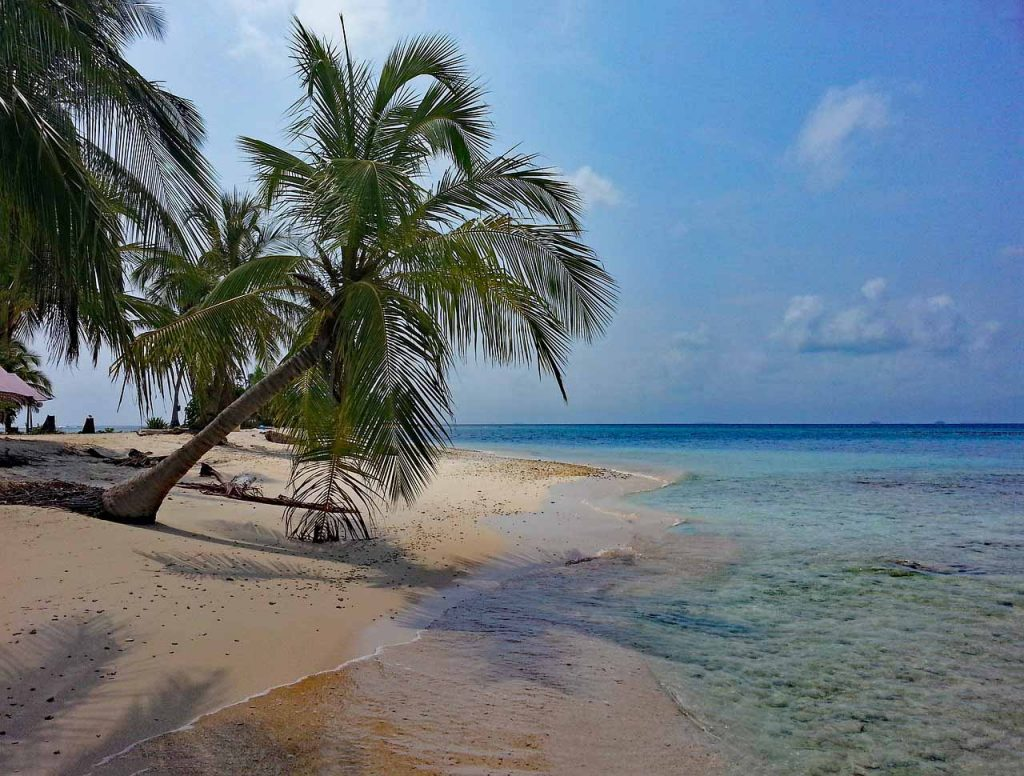 beach wallpaper, caribbean, panama, san blas islands, palm trees