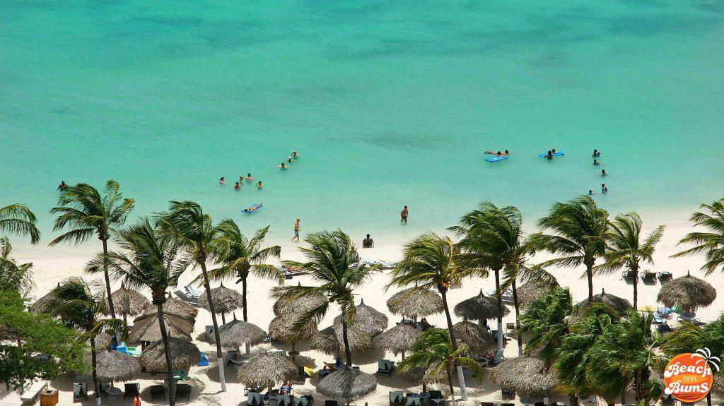 beach wallpaper, palm trees